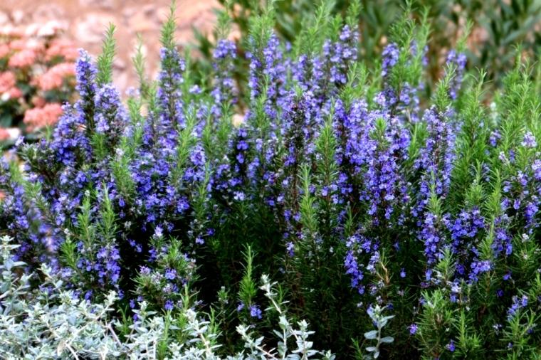 Provence Blog (14)