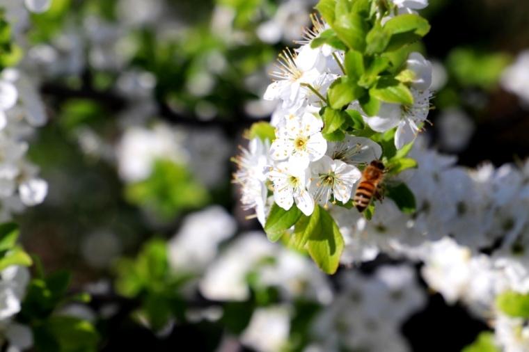 Provence Blog (47)