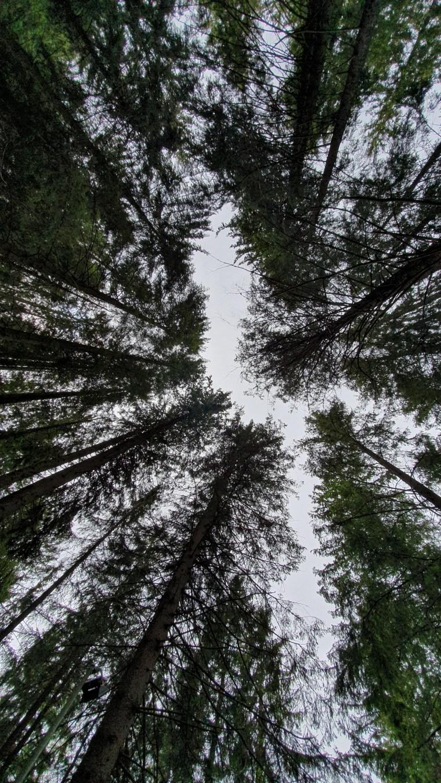 Titisee - Floresta Negra 2019 (3)