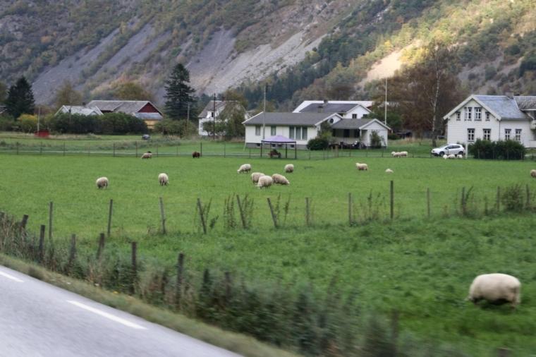 Fiordes Noruegueses 2017 - 9 (108)