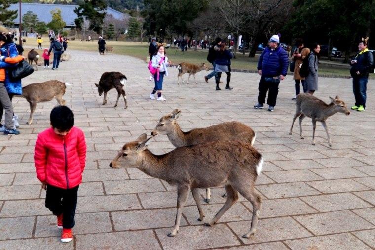 Nara Japao 2019 (10)
