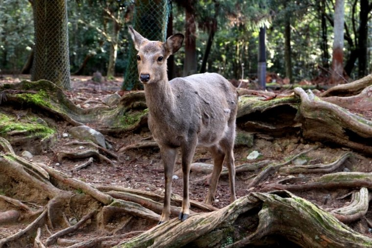 Nara Japao 2019 (11)