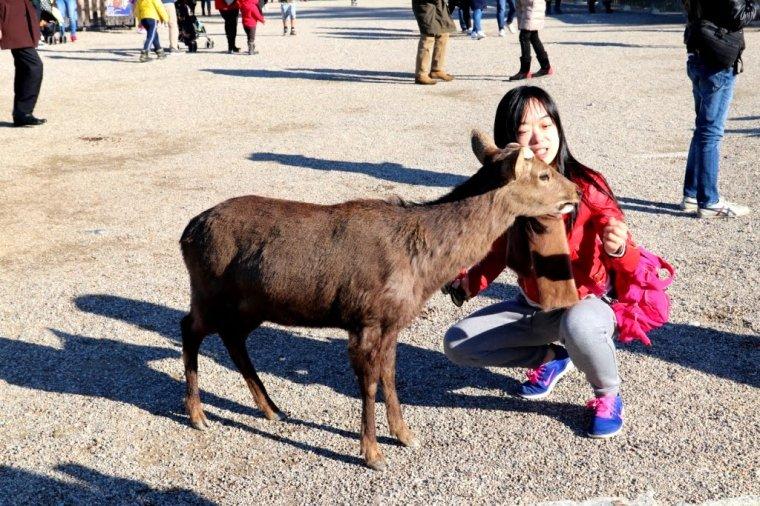 Nara Japao 2019 (4)