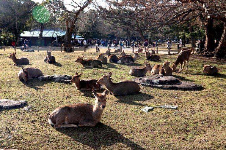 Nara Japao 2019 (9)