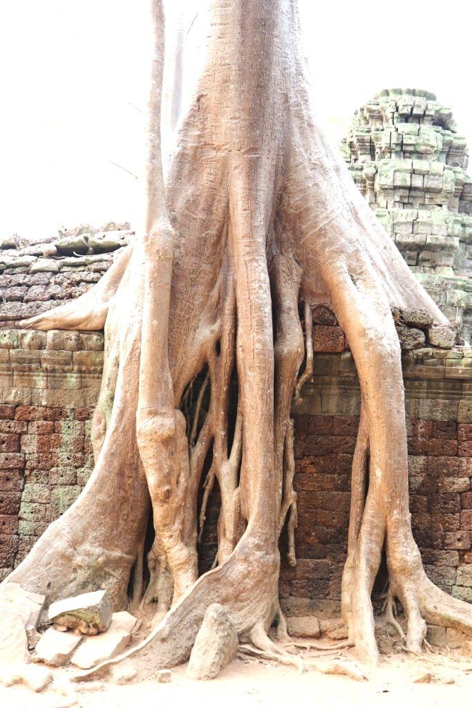 Angkor 2019 (17)