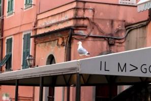 Italia - Cinque Terre - Riomaggiore 2019 (2)